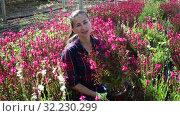 Купить «Portrait of florist woman working in sunny greenhouse full of blooming plants», видеоролик № 32230299, снято 3 июня 2019 г. (c) Яков Филимонов / Фотобанк Лори