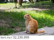 Купить «Дворовый пушистый кот на траве», фото № 32230999, снято 11 мая 2019 г. (c) Литвяк Игорь / Фотобанк Лори
