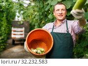 Купить «Portrait of male gardener in apron and gloves picking marrows to bucket», фото № 32232583, снято 13 августа 2018 г. (c) Яков Филимонов / Фотобанк Лори
