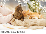 Купить «close up of owner with red and tabby cat in bed», фото № 32249583, снято 15 ноября 2017 г. (c) Syda Productions / Фотобанк Лори