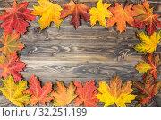 Купить «Открытка из ярких осенних кленовых листьев на фоне старых деревянных досок», фото № 32251199, снято 1 октября 2019 г. (c) Наталья Волкова / Фотобанк Лори