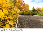 Осень. Стоковое фото, фотограф Кристина Викулова / Фотобанк Лори