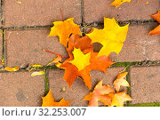 Осенние листья на тротуаре. Стоковое фото, фотограф Кристина Викулова / Фотобанк Лори