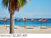 Idyllic scenery, concept of summer holidays, palm tree and straw parasols in a row on the coast of Mediterranean Sea, Majorca Island, Baleares, Spain (2018 год). Стоковое фото, фотограф Alexander Tihonovs / Фотобанк Лори