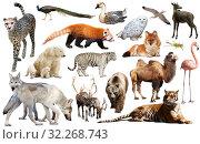 Купить «asia animals isolated», фото № 32268743, снято 18 октября 2019 г. (c) Яков Филимонов / Фотобанк Лори