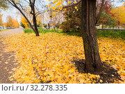 Купить «Осень в городе Вятские Поляны Кировской области», фото № 32278335, снято 5 октября 2019 г. (c) Владимир Федечкин / Фотобанк Лори