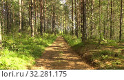 Купить «Trail in pine forest. Calm summer landscape. Summer sunny day in forest. Play of light and shadow. 4K video», видеоролик № 32281175, снято 10 июля 2020 г. (c) Dmitry Domashenko / Фотобанк Лори