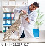 Купить «Doctor vet practicing on dog skeleton», фото № 32287827, снято 23 марта 2018 г. (c) Elnur / Фотобанк Лори