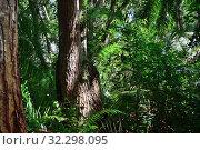Купить «Jozani rain forest. Zanzibar, Tanzania, Africa», фото № 32298095, снято 6 октября 2019 г. (c) Знаменский Олег / Фотобанк Лори