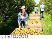 Купить «Portrait of cheerful female owner of fruit garden standing near boxes with ripe pears and showing good harvest», фото № 32305335, снято 14 августа 2019 г. (c) Яков Филимонов / Фотобанк Лори