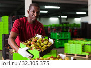 Купить «Afro workman carrying box with harvested pears», фото № 32305375, снято 21 октября 2019 г. (c) Яков Филимонов / Фотобанк Лори
