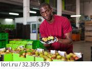 Купить «Focused African American workman engaged on fruit sorting department examining harvested pears quality», фото № 32305379, снято 12 ноября 2019 г. (c) Яков Филимонов / Фотобанк Лори