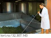 Female winemaker controlling crushing of grapes. Стоковое фото, фотограф Яков Филимонов / Фотобанк Лори