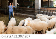 Купить «Portrait of female farmer feeding sheeps on farm», фото № 32307267, снято 23 января 2020 г. (c) Яков Филимонов / Фотобанк Лори