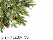 Купить «Branch of spruce with cones on white background», фото № 32307735, снято 19 октября 2019 г. (c) Юлия Бабкина / Фотобанк Лори
