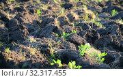 Купить «Fragment of plowed land with weed», видеоролик № 32317455, снято 24 августа 2019 г. (c) Володина Ольга / Фотобанк Лори