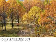 Купить «Осенний пейзаж с красочными деревьями», фото № 32322531, снято 14 октября 2018 г. (c) Елена Коромыслова / Фотобанк Лори