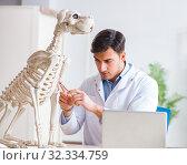 Купить «Doctor vet practicing on dog skeleton», фото № 32334759, снято 23 марта 2018 г. (c) Elnur / Фотобанк Лори