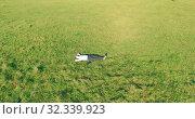 Купить «Low orbital flight around man on green grass with notebook pad at yellow rural field.», видеоролик № 32339923, снято 21 марта 2019 г. (c) Александр Маркин / Фотобанк Лори