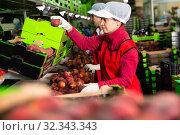 Купить «Focused woman working on fruit sorting line at warehouse, checking quality of nectarines», фото № 32343343, снято 8 июня 2019 г. (c) Яков Филимонов / Фотобанк Лори