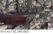 Купить «Fisherman catches fish on float and accidentally caught wild red salmon fish Sockeye Salmon», видеоролик № 32343663, снято 13 декабря 2019 г. (c) А. А. Пирагис / Фотобанк Лори