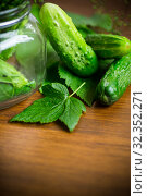 Купить «cucumbers and spices with herbs for canning in a jar», фото № 32352271, снято 15 июля 2019 г. (c) Peredniankina / Фотобанк Лори