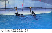 Купить «Presentation (Show) VDNKh Moskvarium - the biggest in Europe sea aquarium and entertainment center, Moscow, Russia», видеоролик № 32352459, снято 31 октября 2019 г. (c) Владимир Журавлев / Фотобанк Лори