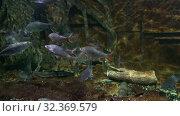 Купить «Фрагмент экспозиции океанариума зоопарка Чианг Мая. Таиланд», видеоролик № 32369579, снято 20 декабря 2018 г. (c) Виктор Карасев / Фотобанк Лори