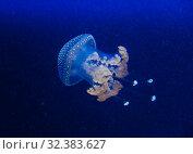 Купить «Jellyfish in the deep blue ocean with bright illuminance», фото № 32383627, снято 18 июля 2019 г. (c) Aleksejs Bergmanis / Фотобанк Лори