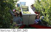 Купить «Group of garden workers gathering in crops of apples on modern harvesting machine», видеоролик № 32391243, снято 28 сентября 2019 г. (c) Яков Филимонов / Фотобанк Лори