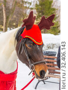 Купить «Portrait of a festively decorated horse.», фото № 32406143, снято 10 марта 2019 г. (c) Акиньшин Владимир / Фотобанк Лори