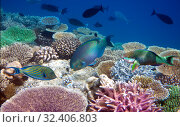 Bright tropical fish over a coral reef. Стоковое фото, фотограф Куликов Константин / Фотобанк Лори