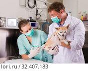 Купить «Dog undergoing surgery at vets», фото № 32407183, снято 13 сентября 2019 г. (c) Яков Филимонов / Фотобанк Лори