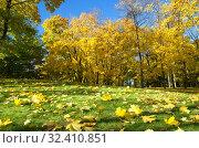 Купить «Осенний пейзаж в солнечный день», фото № 32410851, снято 12 октября 2018 г. (c) Елена Коромыслова / Фотобанк Лори