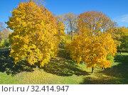 Купить «Осенний пейзаж с желтыми кленами в парке», фото № 32414947, снято 12 октября 2018 г. (c) Елена Коромыслова / Фотобанк Лори
