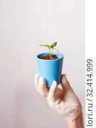 Купить «A female gardener shows a pot with sprouts after a pick.», фото № 32414999, снято 3 апреля 2016 г. (c) Акиньшин Владимир / Фотобанк Лори