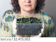 Купить «A female gardener shows a pot with sprouts after a pick.», фото № 32415003, снято 3 апреля 2016 г. (c) Акиньшин Владимир / Фотобанк Лори