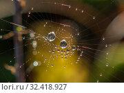 Купить «Many drops of dew on a spider web», фото № 32418927, снято 22 февраля 2020 г. (c) easy Fotostock / Фотобанк Лори