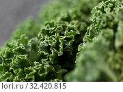 Купить «close up of kale cabbage on table», фото № 32420815, снято 12 апреля 2018 г. (c) Syda Productions / Фотобанк Лори