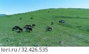 Купить «Flight over wild horses herd on mountain meadow. Summer mountains wild nature. Freedom ecology concept.», видеоролик № 32426535, снято 28 июля 2018 г. (c) Александр Маркин / Фотобанк Лори