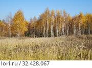 Купить «Осенний пейзаж с березами», фото № 32428067, снято 18 октября 2018 г. (c) Елена Коромыслова / Фотобанк Лори