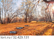 Купить «Beautiful bright sunny colorful autumn landscape. Morning among trees with foliage in nature outdoors in an orange-yellow golden forest in fine warm weather in October in the fall season. Russia, Saratov region», фото № 32429131, снято 19 октября 2019 г. (c) Светлана Евграфова / Фотобанк Лори