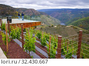 Купить «Viewpoint, Regina Viarum Winery, Ribeira Sacra, Heroic Viticulture, Sil river canyon, Sober, Lugo, Galicia, Spain», фото № 32430667, снято 23 мая 2019 г. (c) age Fotostock / Фотобанк Лори