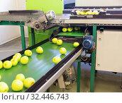 Купить «Ripe green apples on industrial production sorting line of fruits in packing plant», фото № 32446743, снято 9 декабря 2019 г. (c) Яков Филимонов / Фотобанк Лори
