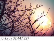 Купить «Branches and glowing triangular sphere», фото № 32447227, снято 2 ноября 2019 г. (c) EugeneSergeev / Фотобанк Лори