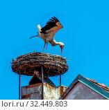 Купить «Ein Storchennest auf einem Achornstein in Rust. Burgenland, Österreich», фото № 32449803, снято 20 января 2020 г. (c) age Fotostock / Фотобанк Лори