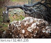 Купить «Baum geknickt nach Sturm», фото № 32461235, снято 1 июня 2020 г. (c) easy Fotostock / Фотобанк Лори