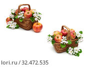 Apple tree flowers and ripe apples on a white background. Стоковое фото, фотограф Ласточкин Евгений / Фотобанк Лори
