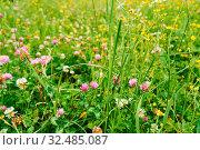 Klee und Wildblumen wachsen auf einer grünen Wiese im Sommer. Стоковое фото, фотограф Zoonar.com/Robert Kneschke / age Fotostock / Фотобанк Лори
