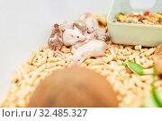 Mäuse in einem Käfig im Labor einer Grundschule für das Fach Biologie. Стоковое фото, фотограф Zoonar.com/Robert Kneschke / age Fotostock / Фотобанк Лори